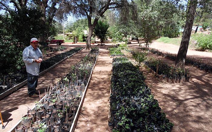 Arboles frutales y de sombra se pueden adquirir en el for Vivero municipal